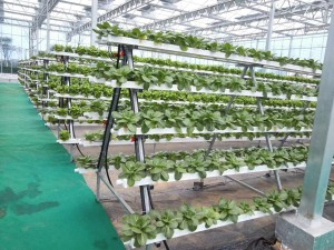 The Hydroponics System