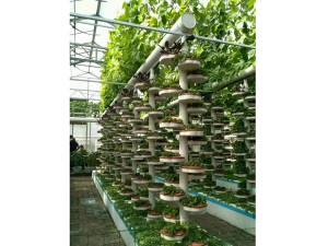 The Hydroponics System3