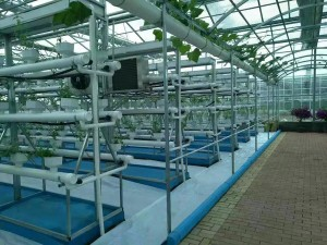 The Hydroponics System4