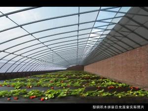 Solar Greenhouse4