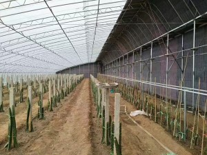 Solar Greenhouse9