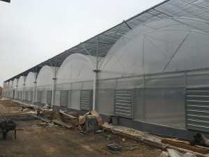 Plastic Film Greenhouse3