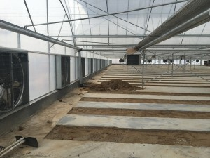 Plastic Film Greenhouse4