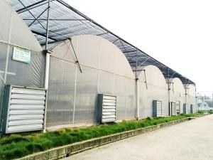 Plastic Film Greenhouse6