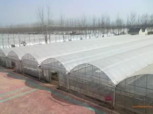 Plastic Film Greenhouse8