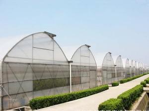 Plastic Film Greenhouse9