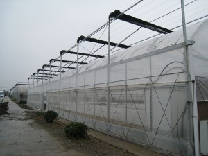 Plastic Film Greenhouse10