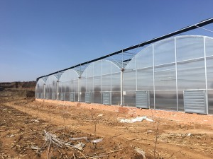 Polycarbonate Sheet Greenhouse2