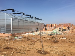 Polycarbonate Sheet Greenhouse3