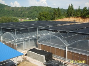 Polycarbonate Sheet Greenhouse4
