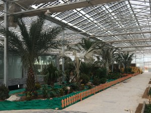Polycarbonate Sheet Greenhouse6