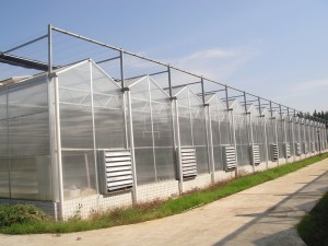Polycarbonate Sheet Greenhouse8