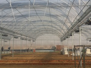 Polycarbonate Sheet Greenhouse12