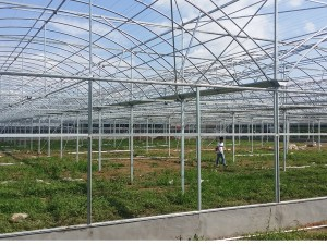 Polycarbonate Sheet Greenhouse14