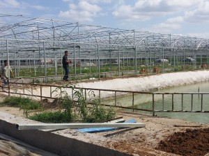 Polycarbonate Sheet Greenhouse15