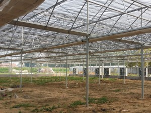 Polycarbonate Sheet Greenhouse16