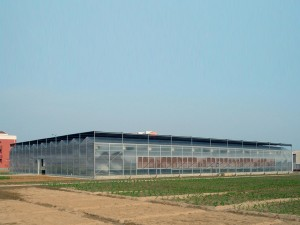 Polycarbonate Sheet Greenhouse17