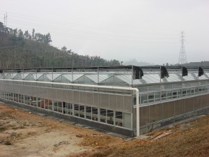 Polycarbonate Sheet Greenhouse18