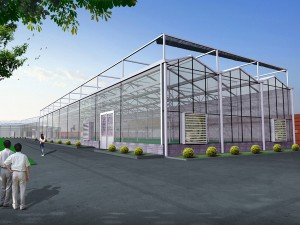 Glass Greenhouse1