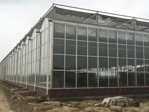 Glass Greenhouse5