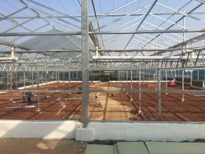 Glass Greenhouse8