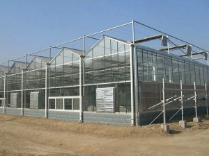 Glass Greenhouse9