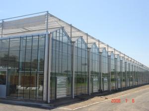 Glass Greenhouse11