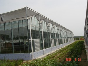Glass Greenhouse12