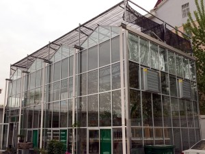 Glass Greenhouse13