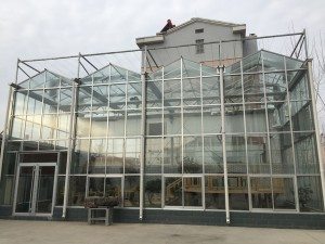 Glass Greenhouse19