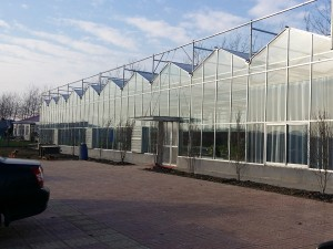 Glass Greenhouse20