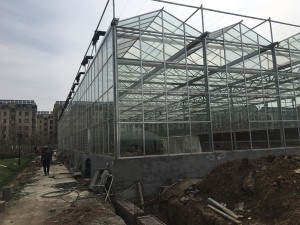 Glass Greenhouse21
