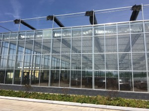 Glass Greenhouse22