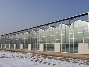 Glass Greenhouse24